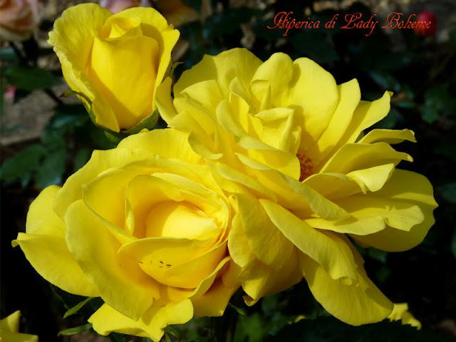 hiperica_lady_boheme_blog_di_cucina_ricette_gustose_facili_veloci_rosa_gialla_2