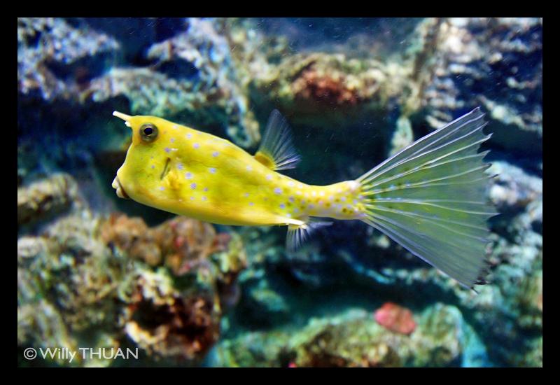 Phuket Aquarium - Phuket 101