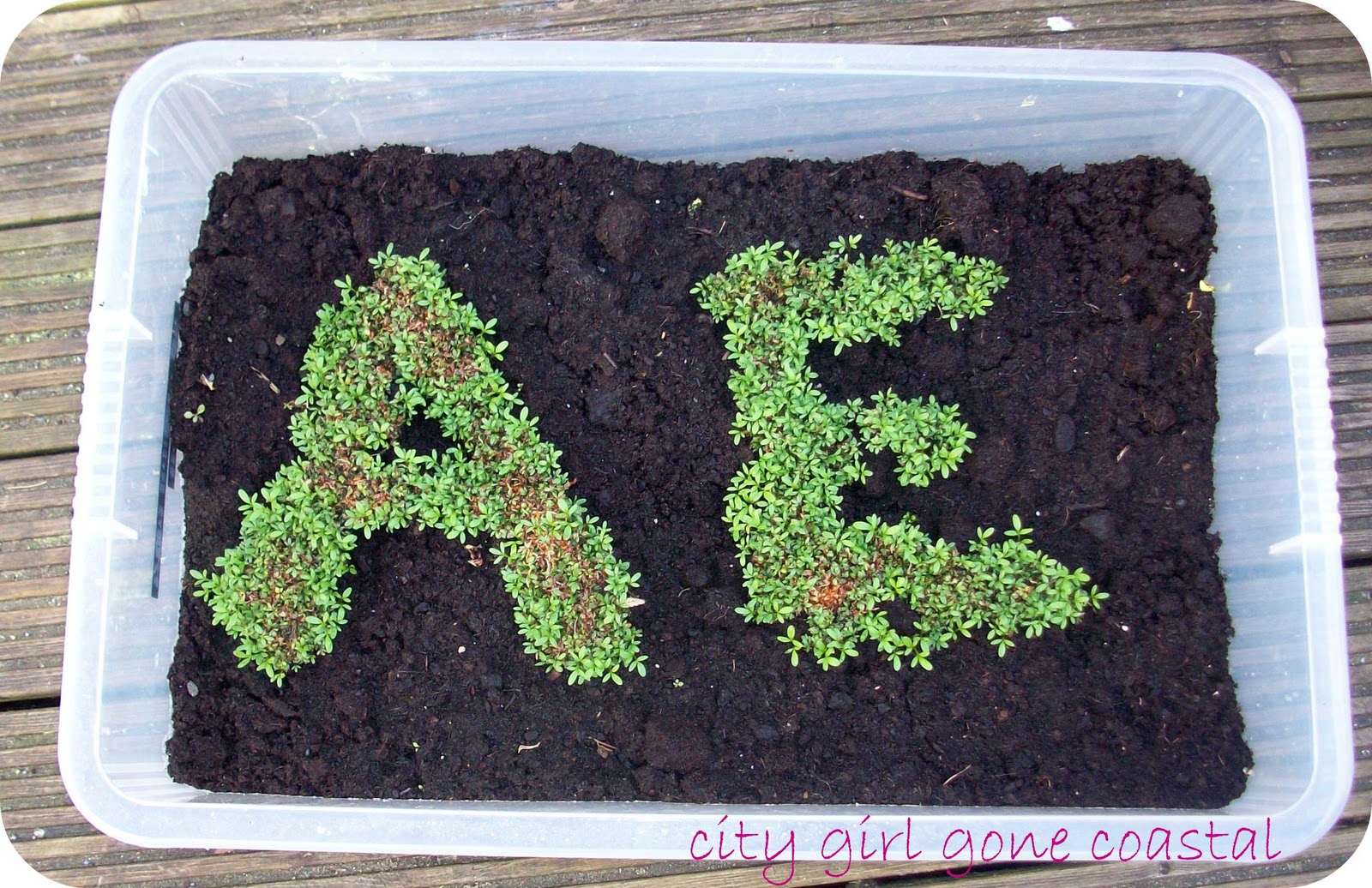 how to make cress seeds