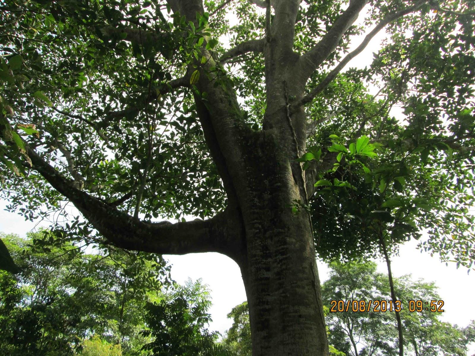 Hay que velar por la conservaci n de los rboles nativos for Medio en el que habitan los arboles