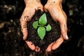 Tips Menjalankan Investasi Tanah Jangka Panjang