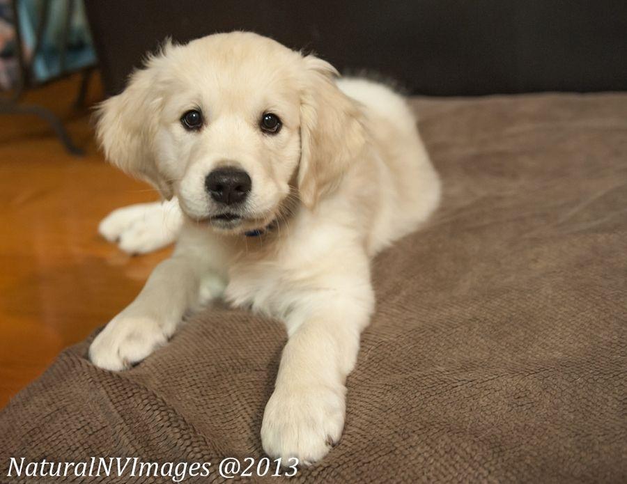 3. Puppy Portrait by Diane Grimmeison
