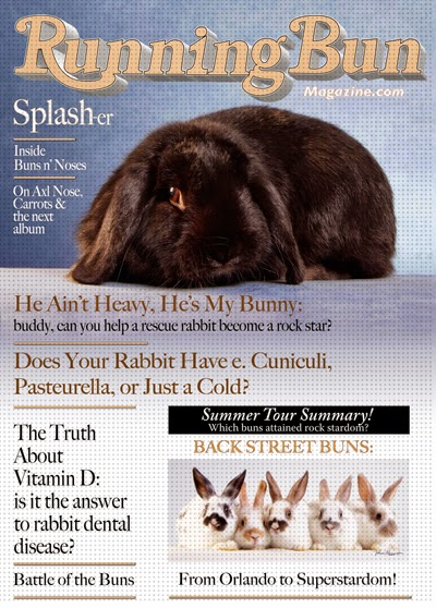http://www.zazzle.com/splash_of_buns_n_noses_running_bun_magazine_cover_poster-228181214708973432?rf=238368801324753632