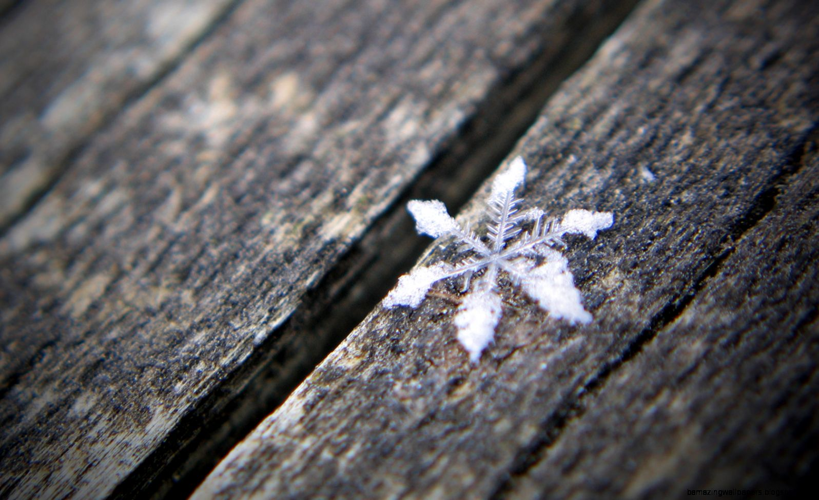 1000 images about Real Snowflakes on Pinterest  Real