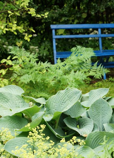 Fra frø til blomst: juni 2012