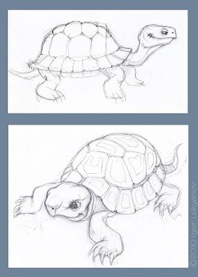 tortoise pencil sketch