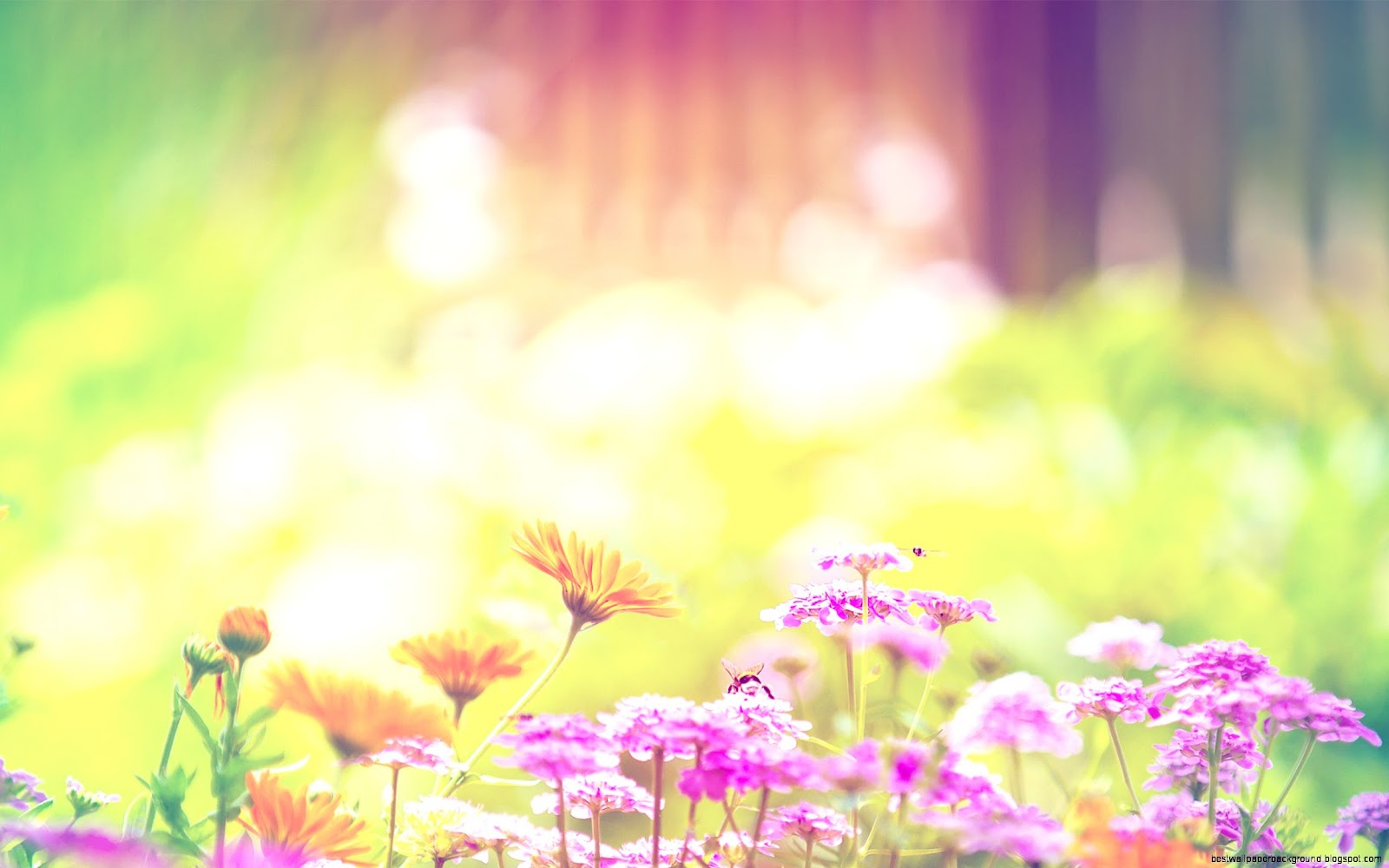 Spring Flower Wallpapers Best Wallpaper Background