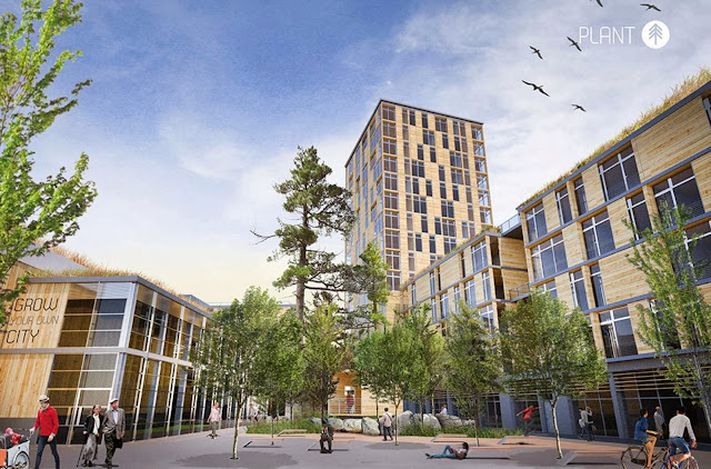 03-Grow-Your-Own-City-Wins-Timber-in-the-City-Competition