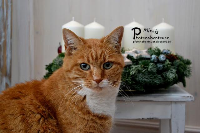 Katze Mimi sitzt am 1. Advent vor einem Adventskranz.