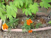 薪を燃やして出た灰や、薬草の入浴剤などは肥料に。