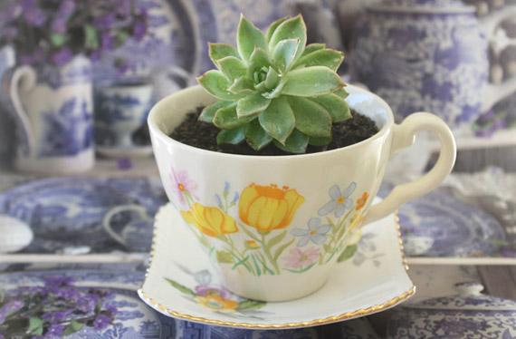 http://3.bp.blogspot.com/-im6wuO7Eaug/T0b0hgymAlI/AAAAAAAAAlY/cEhJOnBw7m8/s1600/plant.jpg