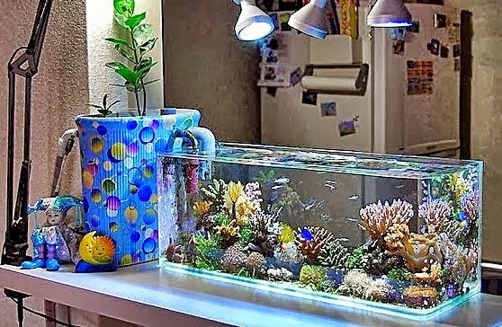Jenis Filter Akuarium Ikan | Aqua Scap