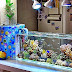 Jenis Filter Akuarium Ikan