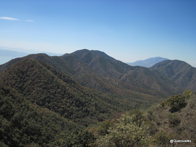 Un bosque escondido en la Sierra de San Juan Cosalá