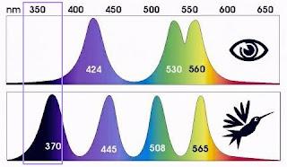 Vision UV pajaros