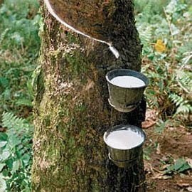 Spot Rubber Prices Remain Steady On Tuesday