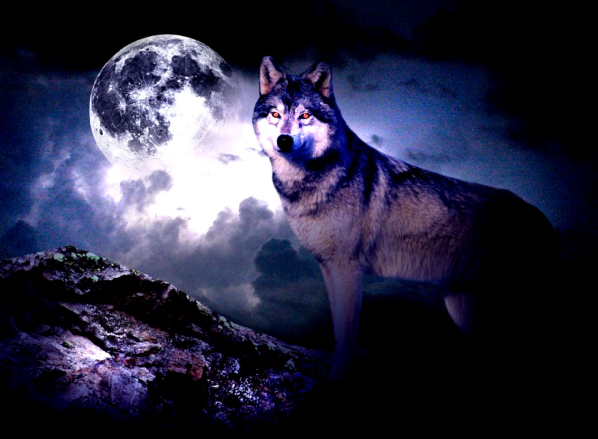 wallpaper wolf moon mega wallpapers
