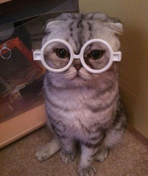 Las fotos más simpáticas de gatos
