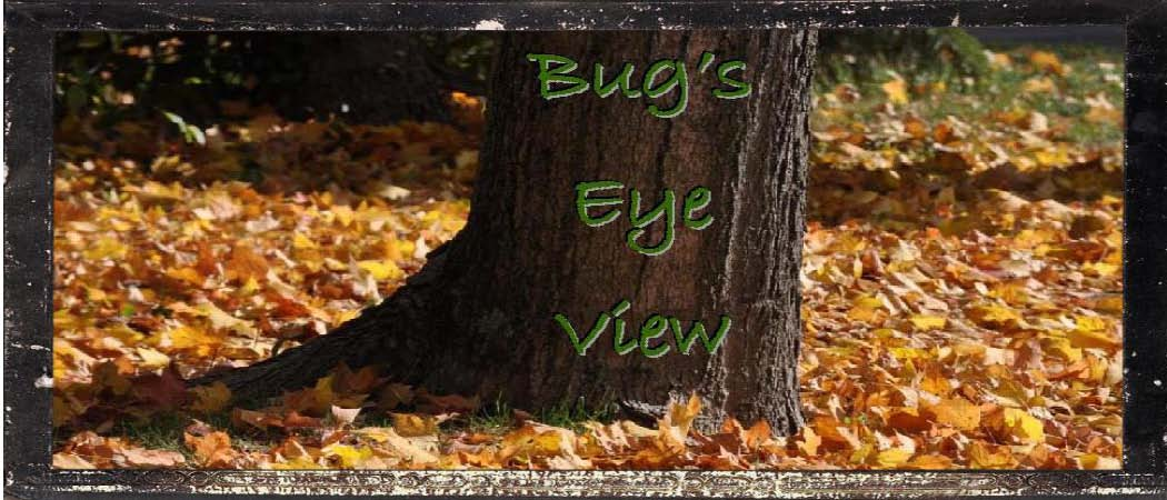 Bug's Eye View