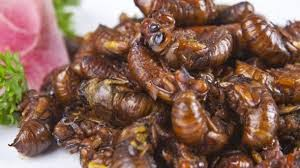 Insects Being Food articles