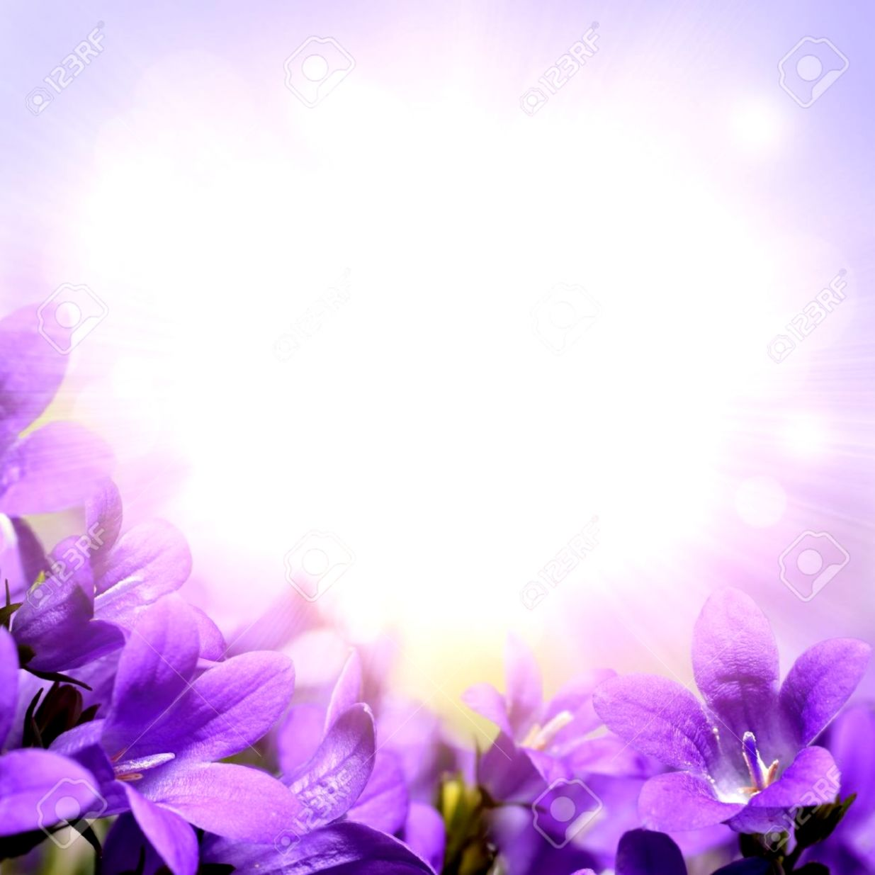 Flower backgrounds purple image wallpaper collections view original size purple flower background royalty free stock image image 12209816 mightylinksfo