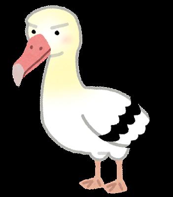 アホウドリの画像 p1_18