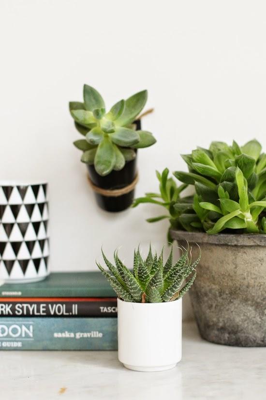 Mini Plant Hanger DIY | 23qm Stil