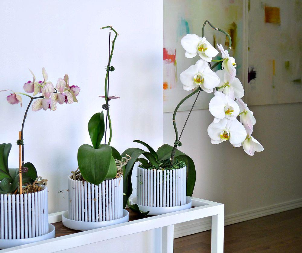 http://3.bp.blogspot.com/-invbhR1xXWI/Vb5P1Qc-wEI/AAAAAAAAauA/vvLNq0hhVBM/s1600/orchid%2Bpots%2Bplastic.jpg