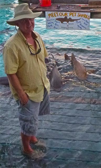 nurse sharks at compas cay exuma bahama