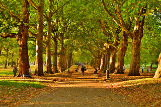 Oak Island Se Thepiratebay