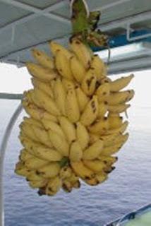 パラオ ダイビング パラオ産バナナ