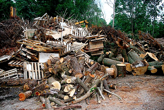 """It's called """"urban biomass,"""" and it's ours (Credit: spsmw.org) Click to enlarge."""