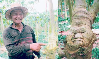 MD. JUDYAR menunjukkan batang pokok betiknya yang berwajah manusia sedang marah di Pontian, Johor semalam.