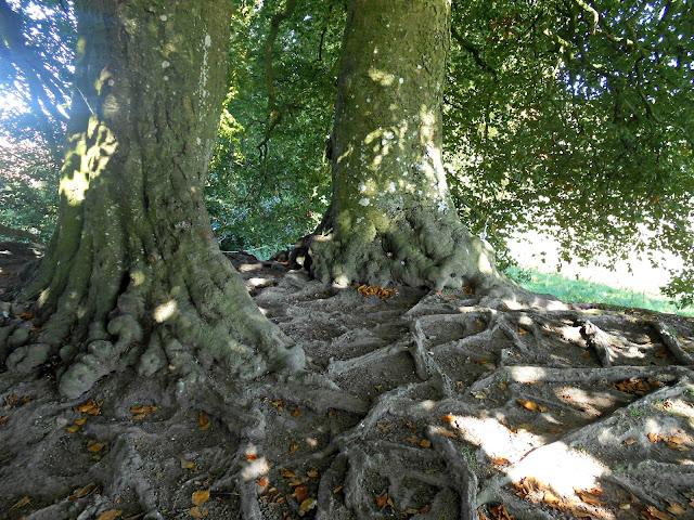 Avebury Stone Circle Magical Trees