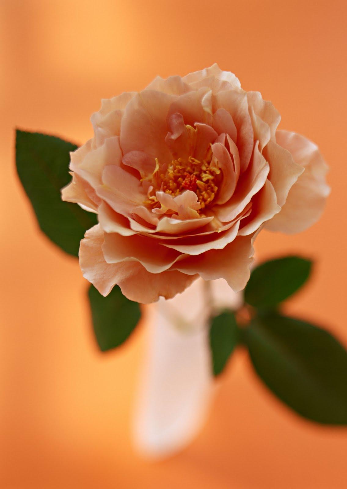 flower tucc