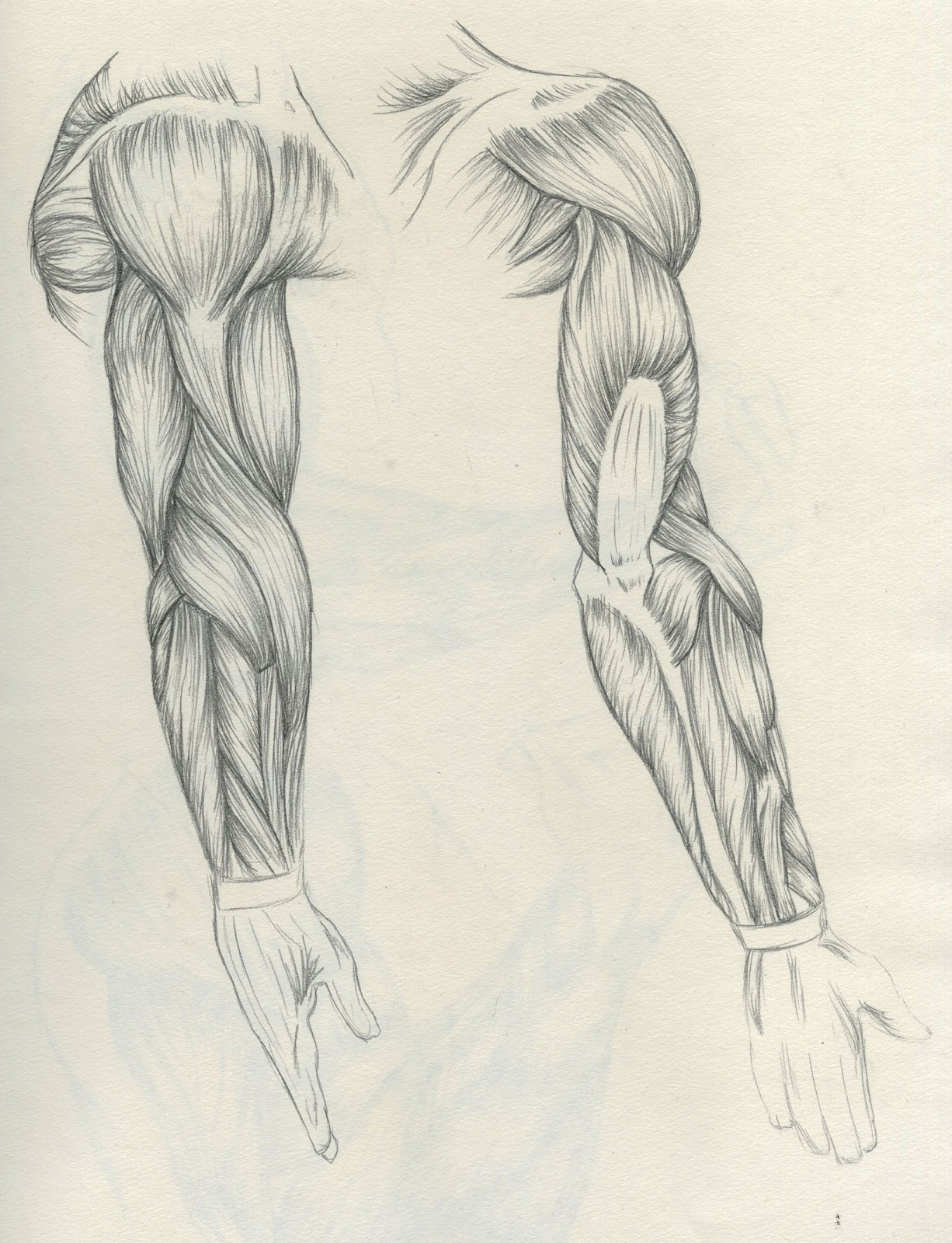 Ellenstration: Anatomy Practice - Tickets to the Gun Show