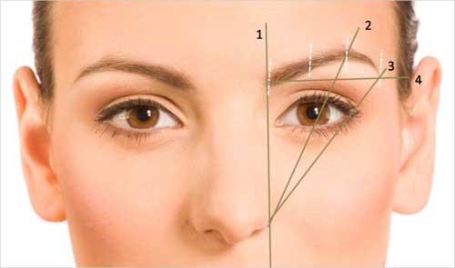 varför har man ögonbryn