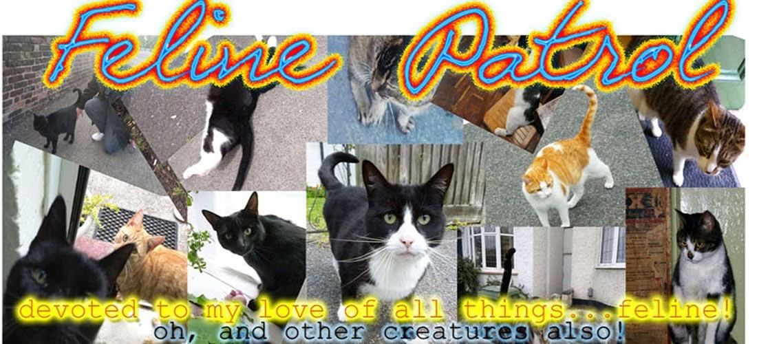 ..feline patrol..