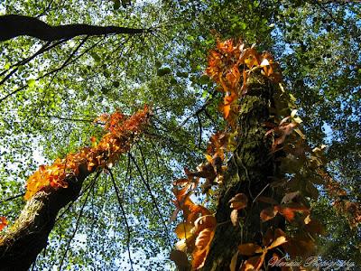 Zdjęcie przedstawiające jesień w lesie, perspektywa zbieżna, kompozycja