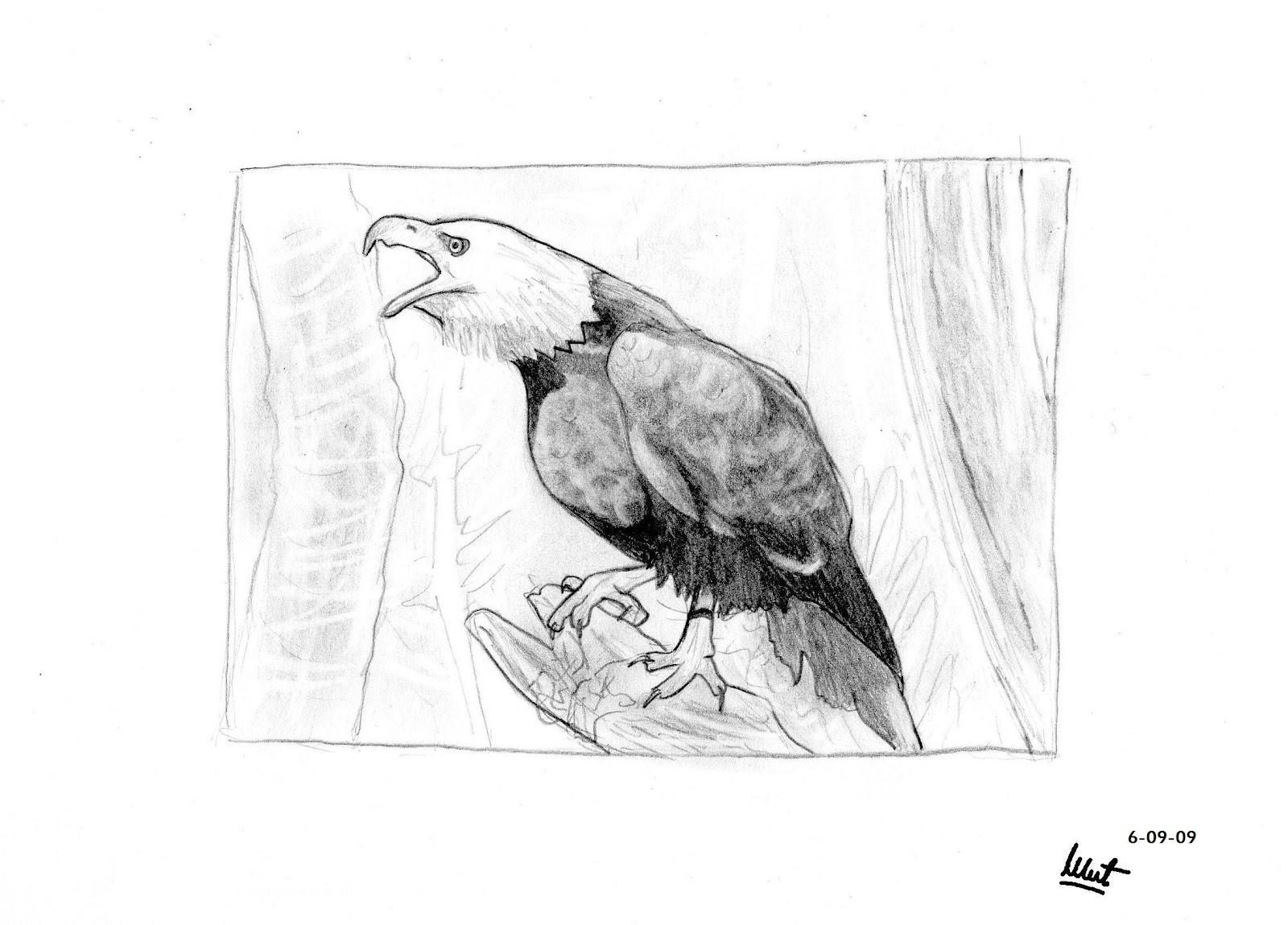 Arte Nadsat Dibujo a lpiz  guila de cabeza blanca