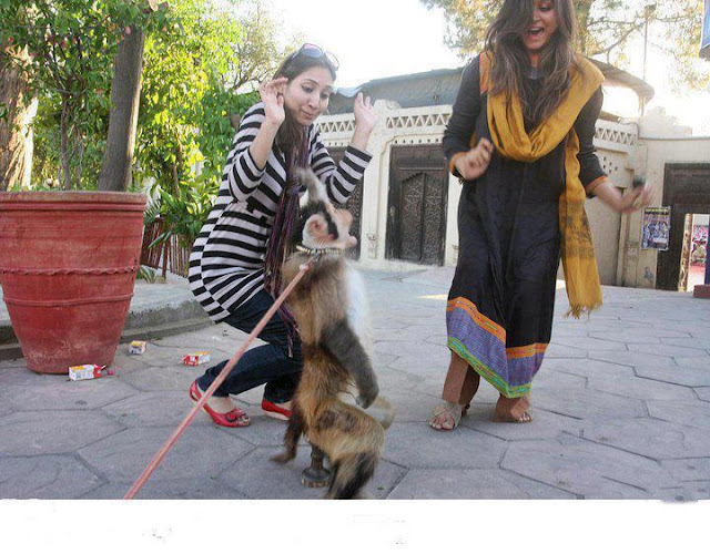 monkey attack on hot pakistani girls
