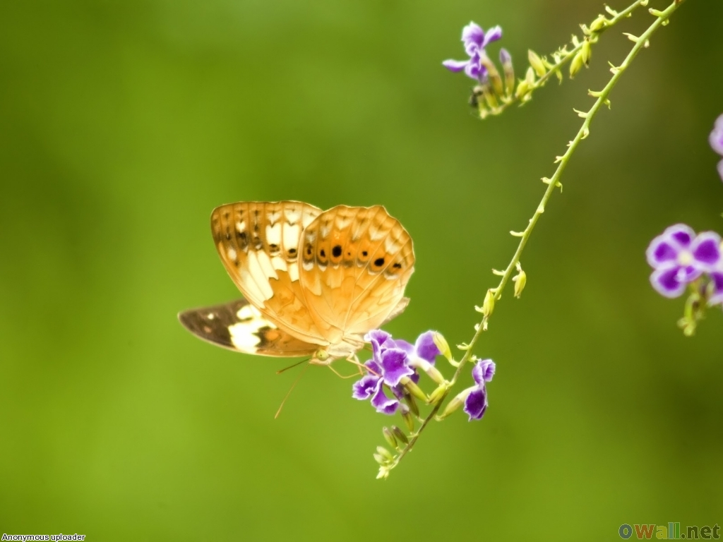 Butterfly wallpaper for walls funny animal for Butterfly wallpaper for walls