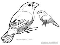 Mewarnai Gambar Burung Bondol Taruk