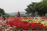 เทศกาลดอกกุหลาบ ที่ Seoul Grand Park
