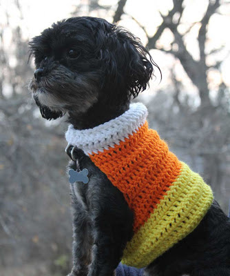 black dog wearing a larger crocheted candy corn design sweater