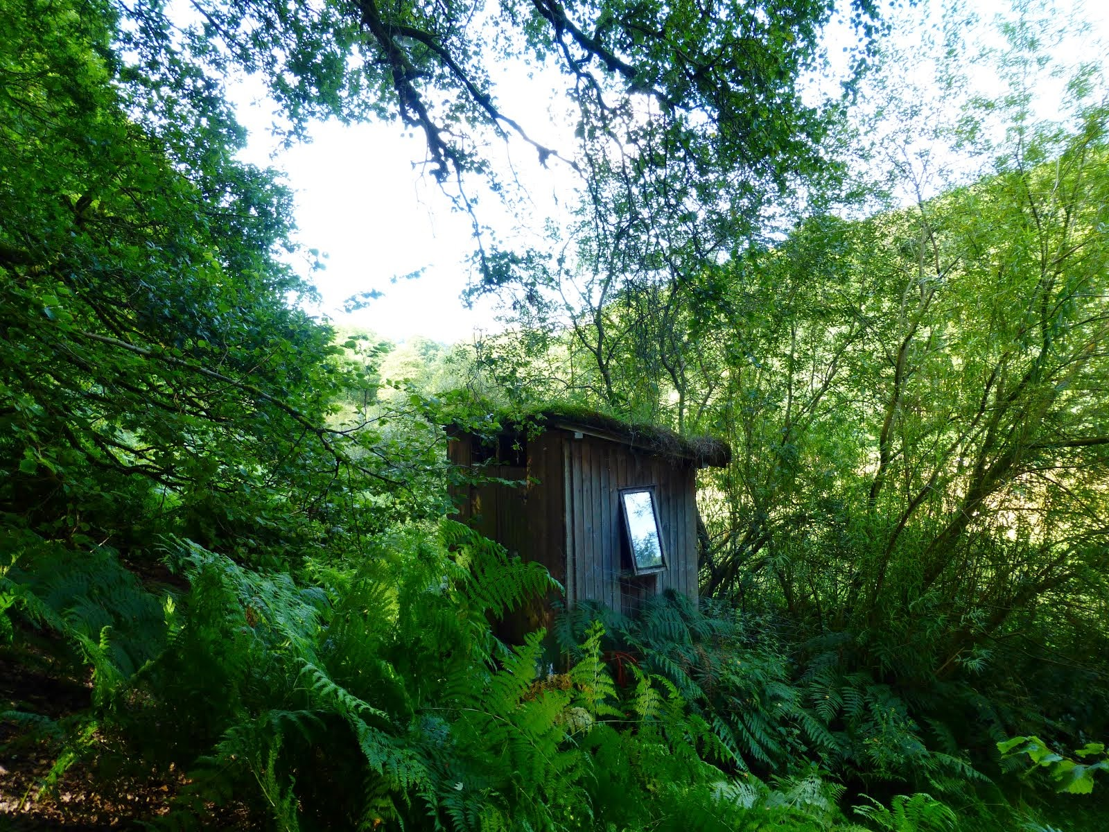 Willow compost toilet