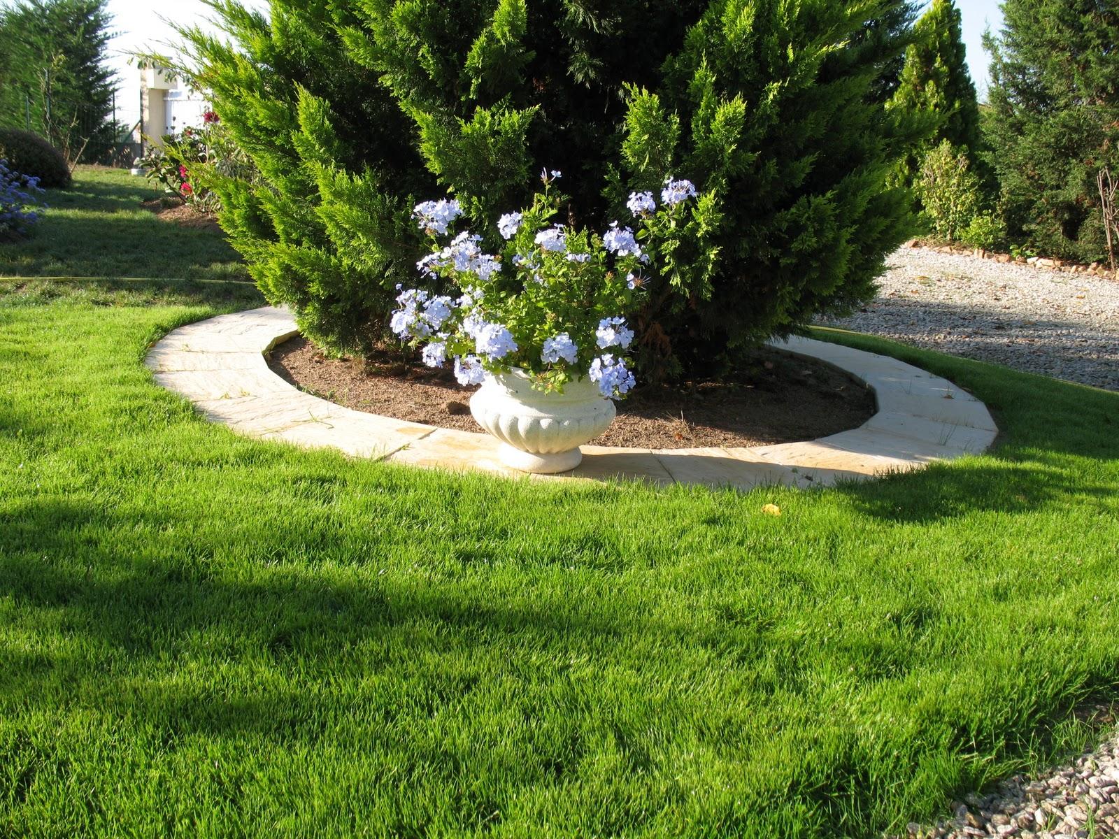 Roses du jardin ch neland pelouse revue et corrig e - Arrosage gazon apres semis ...