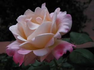 ROSA LUARCA (haz clic en la imagen y te llevo al blog Flores y palabras)