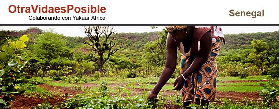 OtraVidaesPosible colaborando con Yakaar Africa - Senegal