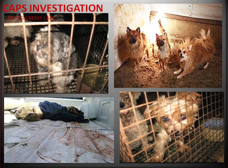 UNDERCOVER MILL INVESTIGATION -- VIDEO PHOTO -- THE USDA BREEDING BUSINESS